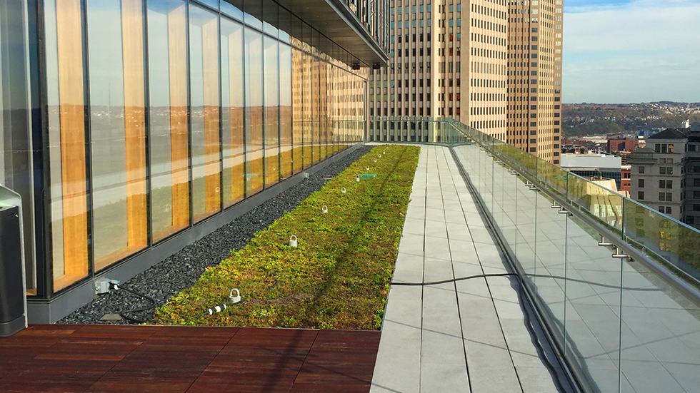 green roof with sedum planting and glass railing at PNC tower pittsburgh